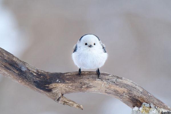可愛すぎる小鳥